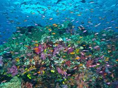 Diving Fiji with Nai'a