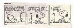 Snoopy on Border Collies Border Collie Humor, Collie Dog, Border Collies, Collie Puppies, Happy Puppy, Puppy Love, Best Dog Breeds, Best Dogs, Charlie Brown And Snoopy