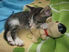kitten hug 2 | Flickr - Photo Sharing!