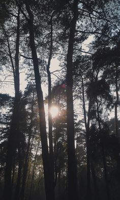 forest, nature, outdoor, sky, summer