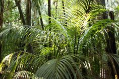 Forêt jungle tropicale