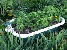 Planted bath tub. Would be fun.