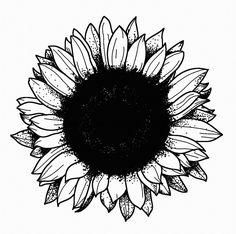 STANLEY DUKE tattoo design tattoos illustration dotwork linework blackwork stippling black flower sunflower