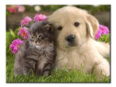 Kitten and Puppy Best Friends Canvas Wall Art - Extra Large 1-panel 40 x 30 inches