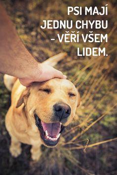 boy dog names bear Cute Puppies, Cute Dogs, Dogs And Puppies, Animals And Pets, Cute Animals, Boy Dog Names, Dog Information, Dog Walking, Dog Life