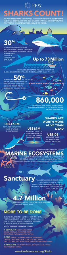 Infographic on shark finning and the importance of sharks in marine ecosystems - Pew Environment Group