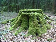 Ways To Decorate Old Tree Stumps In Garden: Moss Cover
