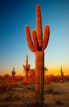 Desert Sunrise (por timpoitevin)