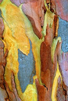 Tree bark ✞When through the woods, and forest glades I wander, And hear the birds sing sweetly in the trees. When I look down, from lofty mountain grandeur And see the brook, and feel the gentle breeze. Natural Forms, Natural Texture, Patterns In Nature, Textures Patterns, Tree Bark, Tree Tree, Peeling Paint, Beautiful Textures, Wood Texture