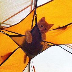 The Littlest Camper