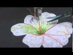 Thread Sketching in Action No 3 Highlighting with Appliqué - YouTube