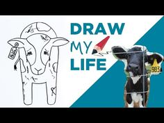 Draw My Life 🐮 A Cow in Today's Dairy Industry - YouTube
