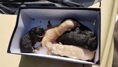 Teneri cuccioli Notizie: Cinque cuccioli di cane salvati grazie agli agenti...