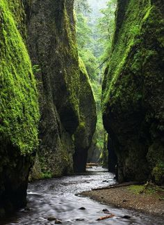 Fern Canyon, Oregon ... Somewhere wondrous to explore and get totally lost!