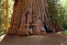 Love Sequoia and Kings Canyon National Parks? Show your love by entering our Facebook Photo Contest which starts today Feb. 14 at 9 a.m. PST and runs through Sat. Feb. 27 at 4 p.m. PST. For more info visit http://go.usa.gov/cVDRx. Photo by Daniela Safarikova a 2015 contest winner. by sequoia_kingscanyon_np