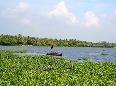 Travelling through the backwaters #India