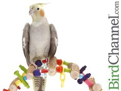 Use the dull days of winter to get you and your pet birds out of any environmental or behavioral ruts.