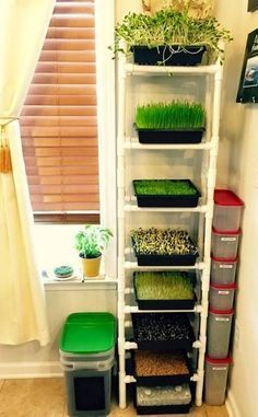 Sprouting is easy! Anybody can do it. Here is what you will need to get started growing sprouts: Seeds A sprouting vessel Trays Potting mix A sprouting rack A drain pan You can do this without building a greenhouse. Believe it or not, the best place for y
