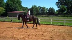 """""""Going behind the vertical. What can you do if your horse is curling it's neck and dropping it's poll? Watch what we do with Beau to bring his poll up at the walk"""""""