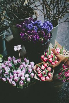 flowers for sale by mariell øyre on Flickr