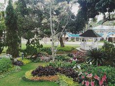 #suroita #davaolifeishere #prayermountain Prayers, Instagram, Plants, Prayer, Beans, Plant, Planets