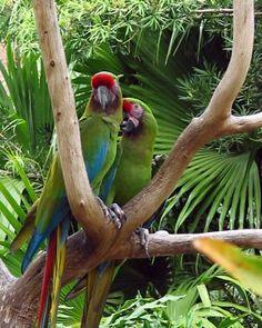 W sercu zielonego piekła - Amazonia
