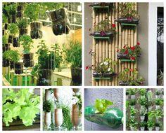 Jardines verticales con botellas de PET