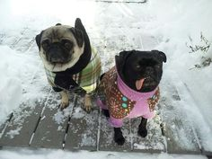 One good thing about winter, it gives us an excuse to dress up our dogs in hilarious clothes!