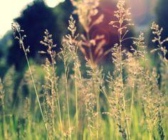 GRASS, FIELD, AFTERNOON, SUN, GREEN, SUMMER, NATURE