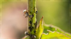 Ant by Ambar Elementals on 500px