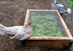 "Wood frame covered with wire for your chicken ""Salad Bar"""