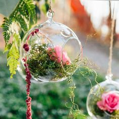 Dreamy hanging terrariums