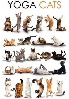 Yoga para gatos