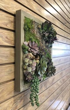 One of a kind faux succulent wall art. Realistic faux succulents and dried moss, pebble accents. No need for watering, a touch of garden inside your home. Faux Succulents, Hanging Succulents, Succulent Arrangements, Faux Plants, Hanging Plants, Hanging Gardens, Succulents Garden, Cactus Plants, Succulent Wall Planter