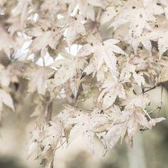 White leaves www.MadamPaloozaEmporium.com www.facebook.com/MadamPalooza