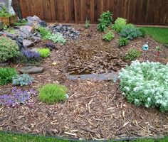 Rain gardens can fix yard drainage issues, and look beautiful too!