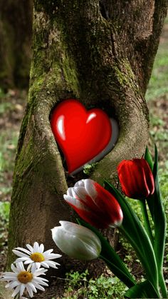 I love you neither with my heart, nor with my mind. Beautiful Love Pictures, Love You Images, Heart Pictures, Heart Images, Heart In Nature, Heart Art, Heart Wallpaper, Love Wallpaper, Love Flowers