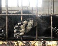 Für ein Ende der Bärengallefarmen