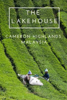 Get a break from the stifling heat of Malaysia at this wonderful Tudor style retreat up in the Highlands of Malaysia. : Get a break from the stifling heat of Malaysia at this wonderful Tudor style retreat up in the Highlands of Malaysia. Travel Info, Travel Guides, Travel Tips, Travel Checklist, Travel Stuff, Malaysia Travel, Asia Travel, Little Britain, Cameron Highlands