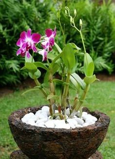 Beginners Guide to Growing Orchids