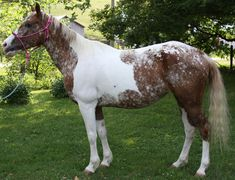 Unusual markings...... - photo posted by ImaRichTxsSugar, via myhorseforum, Rare-colored-horses thread, page 317  (7/20/13)
