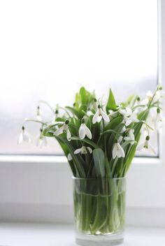 snowdrops have burst through and cover the hillside!  i like this idea in a simple glass.