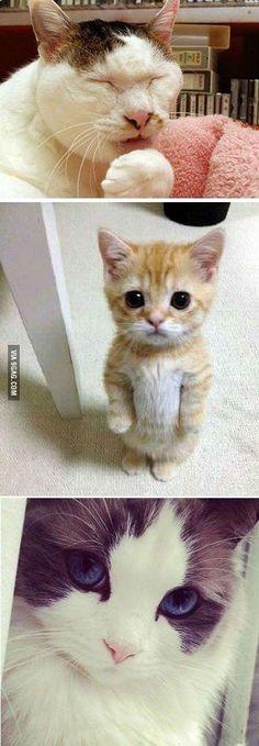 Normal cat, cute cat, beauty cat
