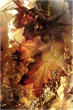 layers of golden autumn leaves ❤-❤