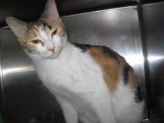 ***9/21 URGENT!!! AMBER COULD COME OFF HOLD AND BE EUTHANIZED AFTER 7PM TOMORROW!!!