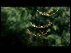 Flying Frogs in the Forrest!