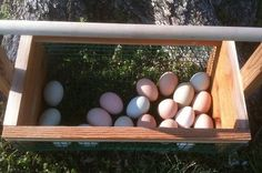 Mom in Okie Land: Chickens 101  Things you need to know about raising chickens