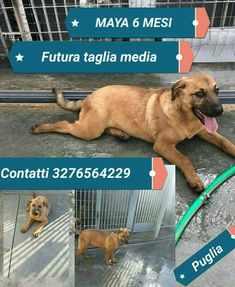 URGENTE ADOZIONE perché è nel Canile Sanitario di Barletta che verrà chiuso e demolito con 30 cani da sistemare!!!!
