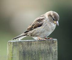 """500px / Photo """"Little Bird"""" by Rita Ivanauskas"""