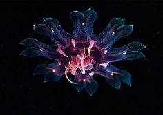 jellyfish-underwater-photography-alexander-semenov-14